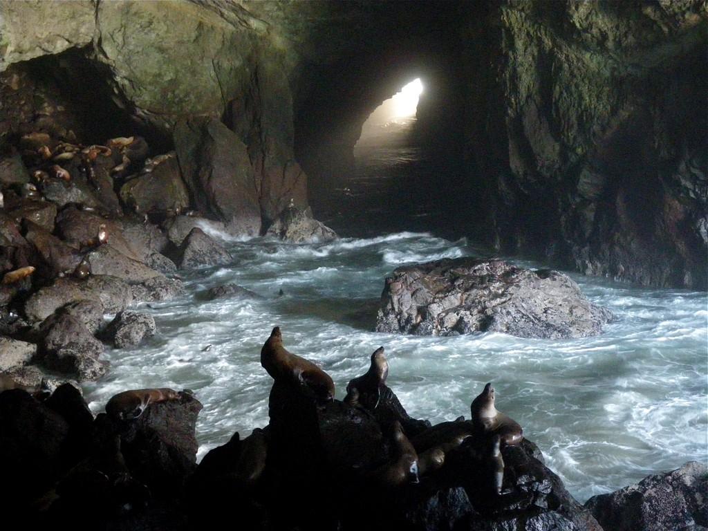 201102 – Sea Lion Cave | A Crosstimber Naturalist