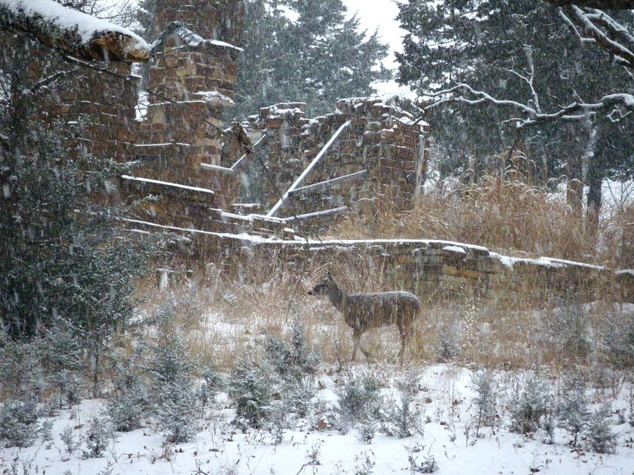 A deer passes Cabin Zero in the falling snow.